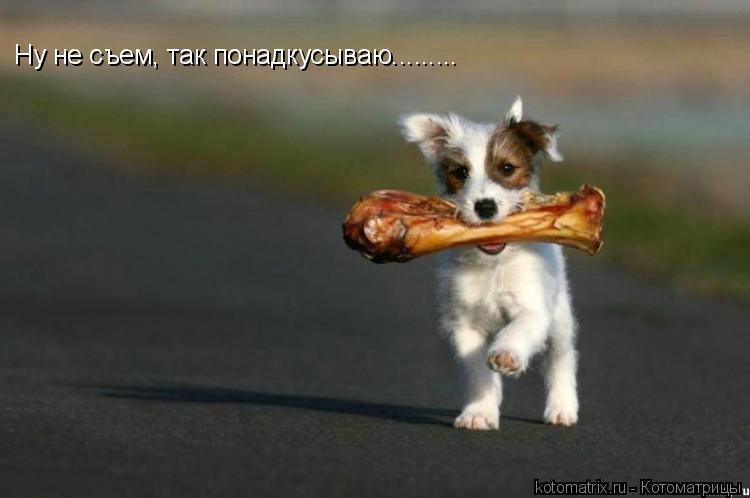 Котоматрица: Ну не съем, так понадкусываю.........