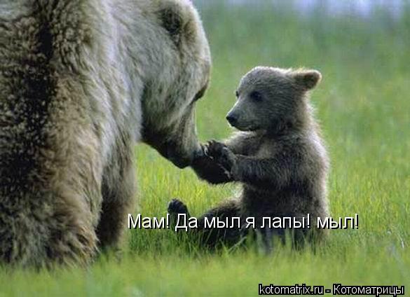 Котоматрица: Мам! Да мыл я лапы! мыл!