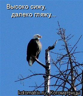 Котоматрица: Высоко сижу, далеко гляжу...