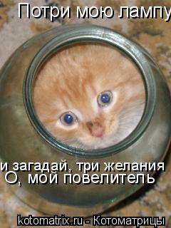 Котоматрица: Потри мою лампу и загадай, три желания О, мой повелитель