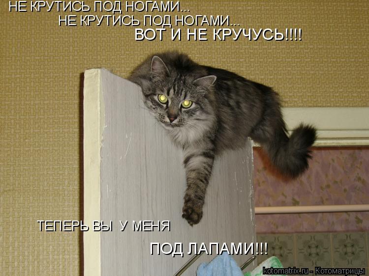 Котоматрица: НЕ КРУТИСЬ ПОД НОГАМИ... НЕ КРУТИСЬ ПОД НОГАМИ... ВОТ И НЕ КРУЧУСЬ!!!! ТЕПЕРЬ ВЫ  У МЕНЯ ПОД ЛАПАМИ!!!
