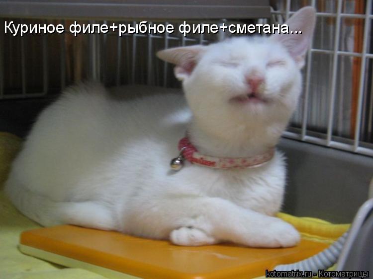 Котоматрица: Куриное филе+рыбное филе+сметана...