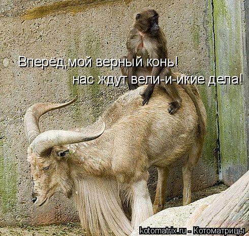 Котоматрица: Вперёд,мой верный конь! нас ждут вели-и-икие дела!