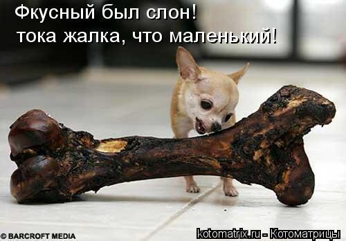 Котоматрица: Фкусный был слон! тока жалка, что маленький!