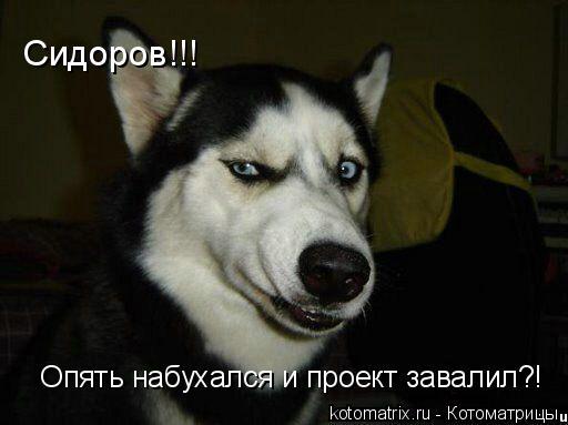 Котоматрица: Сидоров!!!   Опять набухался и проект завалил?!