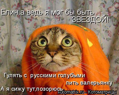 Котоматрица: Блин,а ведь я мог бы быть  ЗВЕЗДОЙ! Гулять с  русскими голубыми пить валерьянку А я сижу тут,позорюсь
