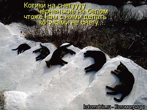 Котоматрица: Котики на снегуууу черненькие на белом чтоже нам с ними делать  котиками не снегу....