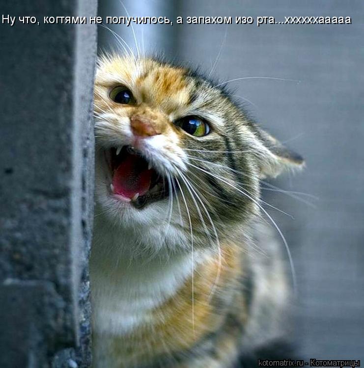 Котоматрица: Ну что, когтями не получилось, а запахом изо рта...ххххххааааа