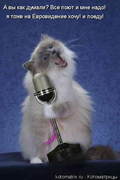 Котоматрица: А вы как думали? Все поют и мне надо! я тоже на Евровидение хочу! и поеду!