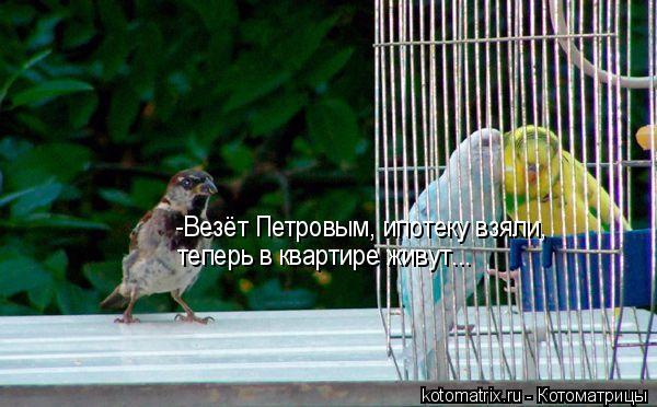 Котоматрица: -Везёт Петровым, ипотеку взяли,  теперь в квартире живут...