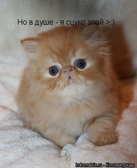 Котоматрица: Но в душе - я сцуко злой >:)