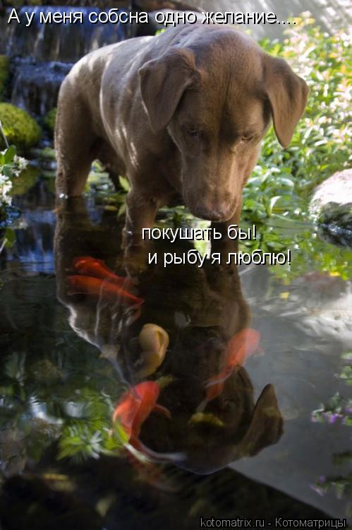 Котоматрица: А у меня собсна одно желание.... покушать бы! и рыбу я люблю!