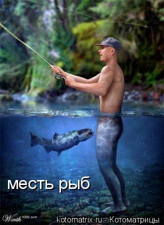 Котоматрица: месть рыб