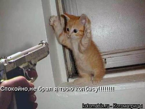 Котоматрица: Спокойно,не брал я твою колбасу!!!!!!!!