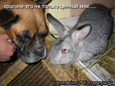 Котоматрица: кролики-это не только ценный мех.....