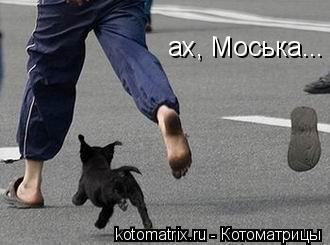 Котоматрица: ах, Моська...