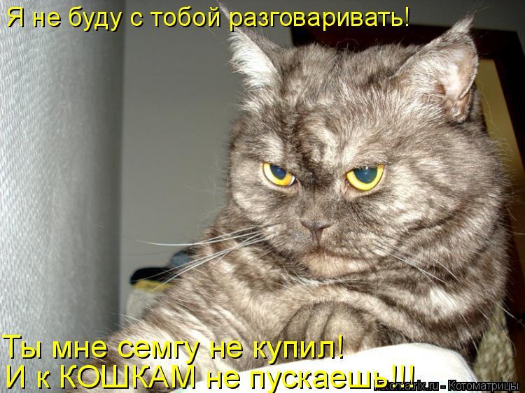 Котоматрица: Я не буду с тобой разговаривать! Ты мне семгу не купил! И к КОШКАМ не пускаешь!!!