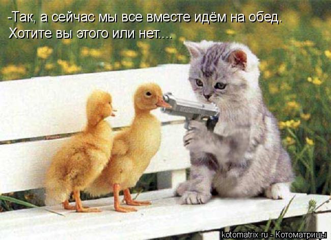Котоматрица: -Так, а сейчас мы все вместе идём на обед. Хотите вы этого или нет....