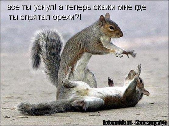 Котоматрица: все ты уснул! а теперь скажи мне где ты спрятал орехи?!
