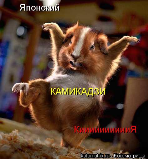 Котоматрица: Японский КАМИКАДЗИ КииииииииииЯ