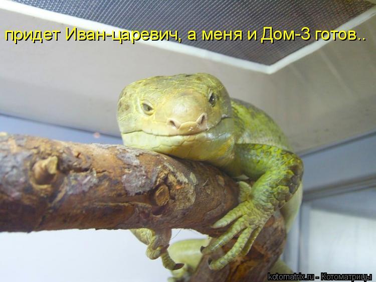 Котоматрица: придет Иван-царевич, а меня и Дом-3 готов..
