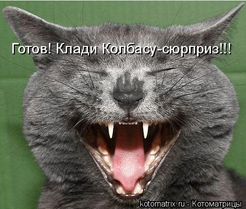 Котоматрица: Готов! Клади Колбасу-сюрприз!!!