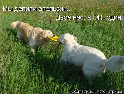 Котоматрица: Мы делили апельсин...  Двое нас, а ОН- один!