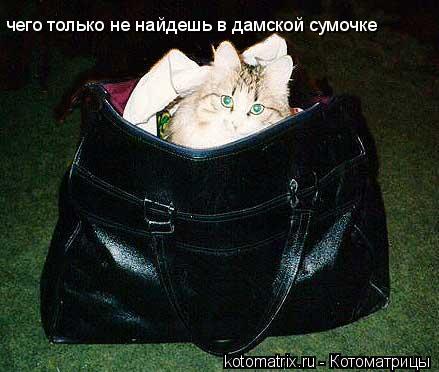 Котоматрица: чего только не найдешь в дамской сумочке