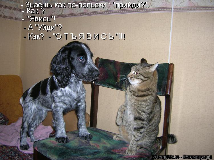 "Котоматрица: - Знаешь как по-польски : ""прийди?""  - Как ? - ""Явись""! - А ""Уйди""? - Как?  - ""О Т Ъ Я В И С Ь ""!!!"