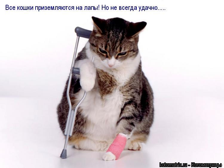 Котоматрица: Все кошки приземляются на лапы! Но не всегда удачно.....
