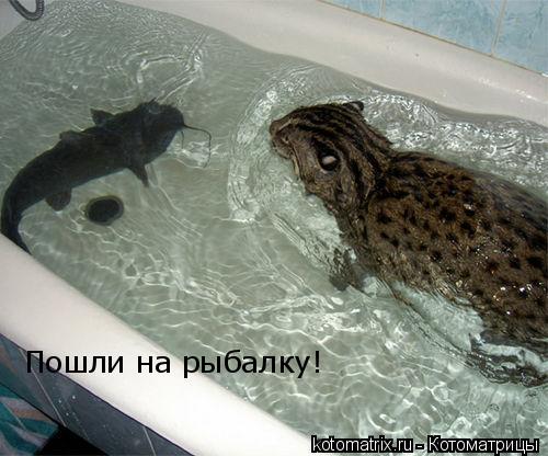 Котоматрица: Пошли на рыбалку!