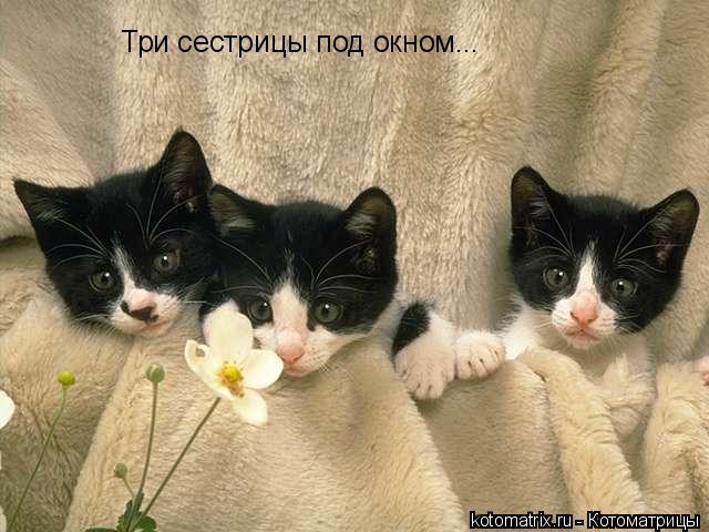 Котоматрица: Три сестрицы под окном...