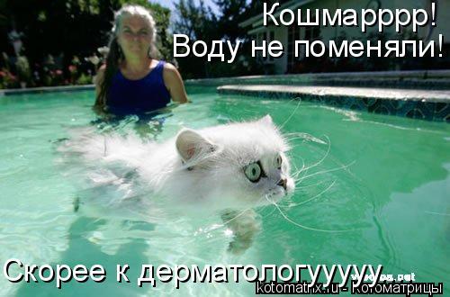Котоматрица: Кошмарррр!  Воду не поменяли! Скорее к дерматологууууу....
