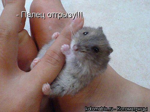 Котоматрица: - Палец отгрызу!!!