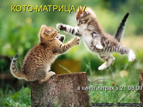 Котоматрица: в кинотиатрах з 21.08.09 КОТО-МАТРИЦА IV