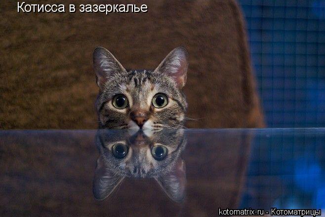 Котоматрица: Котисса в зазеркалье