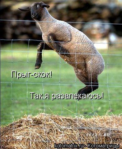 Котоматрица: Прыг-скок! Так я развлекаюсь!