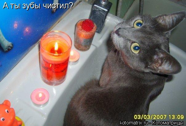 Котоматрица: А ты зубы чистил?