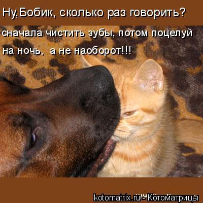 Котоматрица: Ну,Бобик, сколько раз говорить? сначала чистить зубы, потом поцелуй на ночь,  а не наоборот!!!