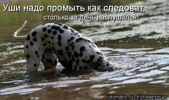 Котоматрица: Уши надо промыть как следоват... столько за день наслушался!