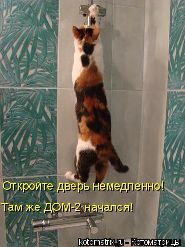 Котоматрица: Откройте дверь немедленно! Там же ДОМ-2 начался!