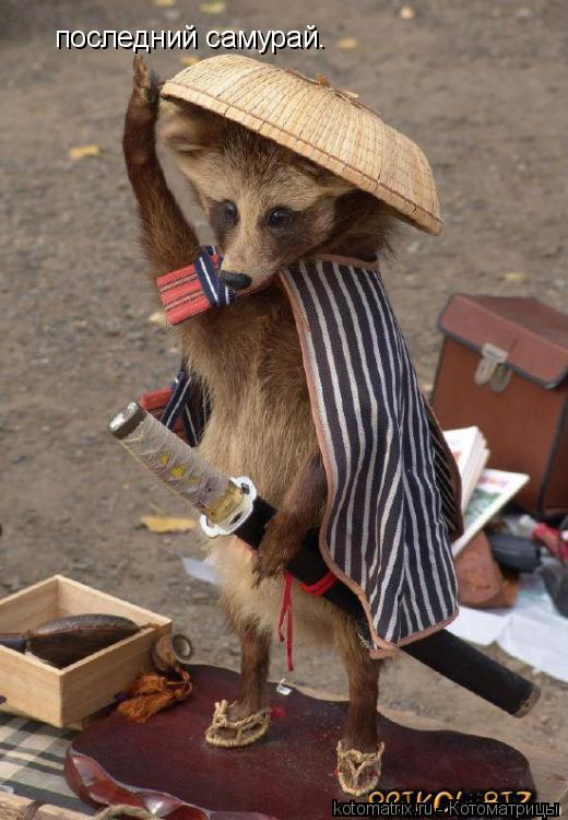Котоматрица: последний самурай.