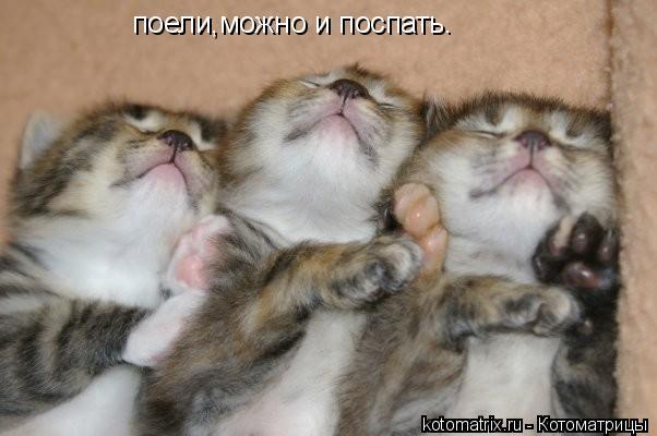 Котоматрица: поели,можно и поспать.