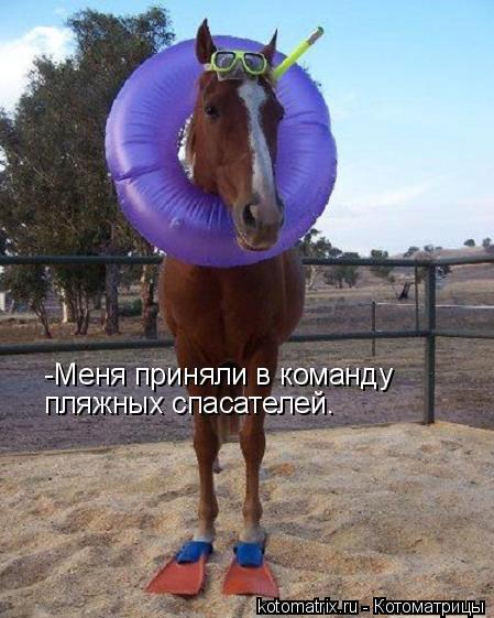 Котоматрица: -Меня приняли в команду пляжных спасателей.