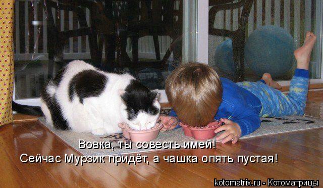 Котоматрица: Вовка, ты совесть имей!  Сейчас Мурзик придёт, а чашка опять пустая!