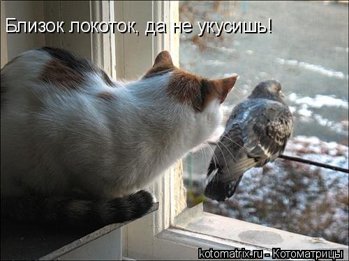 Котоматрица: Близок локоток, да не укусишь!