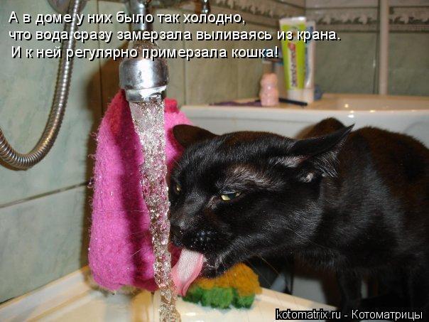 Котоматрица: А в доме у них было так холодно, что вода сразу замерзала выливаясь из крана. И к ней регулярно примерзала кошка!