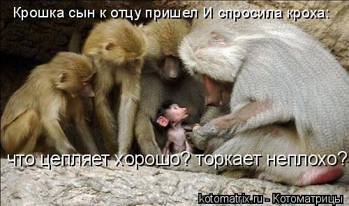Котоматрица: Крошка сын к отцу пришел И спросила кроха:  что цепляет хорошо? торкает неплохо?