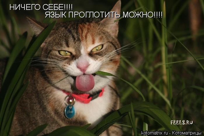 Котоматрица: НИЧЕГО СЕБЕ!!!! ЯЗЫК ПРОГЛОТИТЬ МОЖНО!!!!