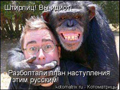 Котоматрица: Штирлиц! Вы идиот! Разболтали план наступления этим русским!